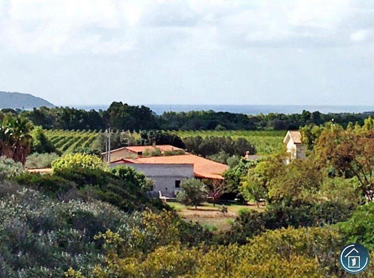 wineyard alghero sale